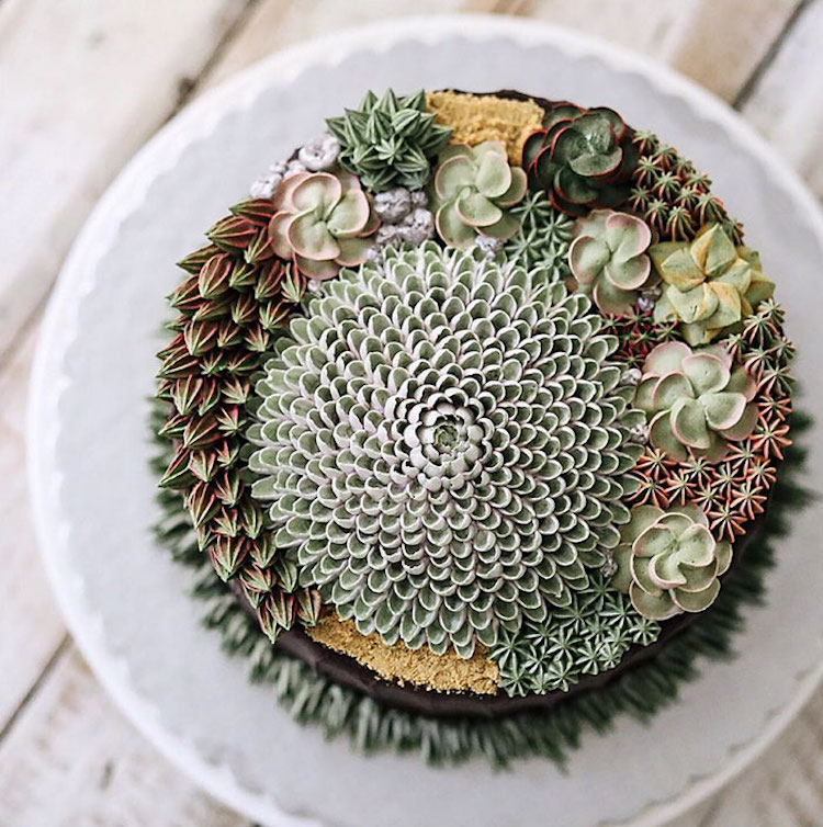 succulent cakes for succulent lovers