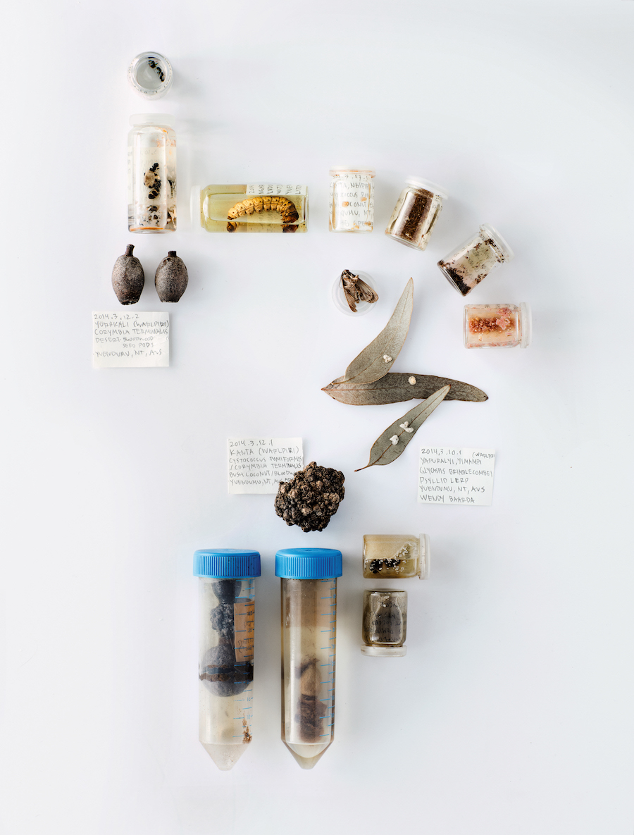 On-Eating-Insects-samples-australia
