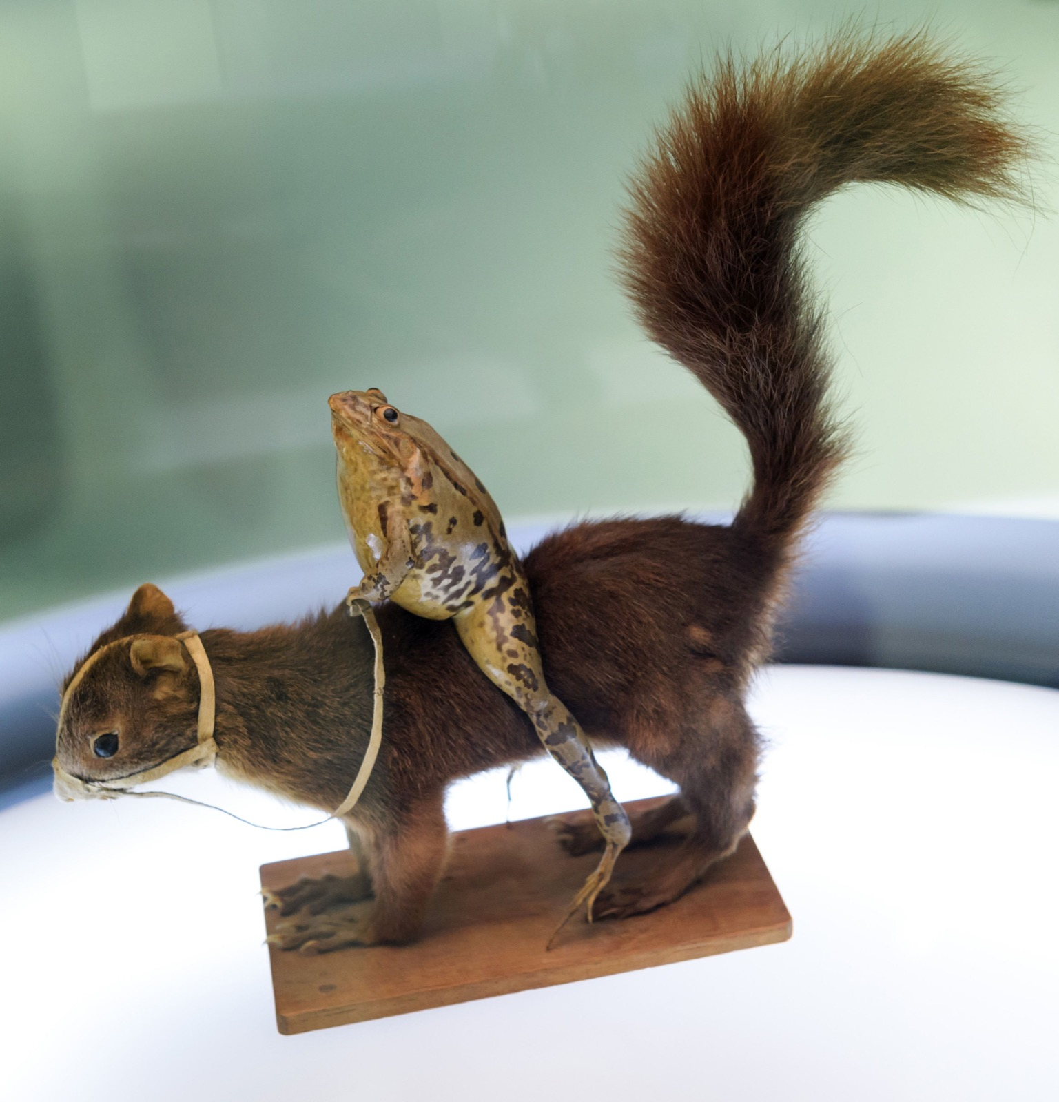 Frog-riding-a-squirrel-at-Frog-Museum-in-Estavayer-le-Lac-western-Switzerland-FABRICE-COFFRINI-AFP-Getty-Images-thechicflaneuse