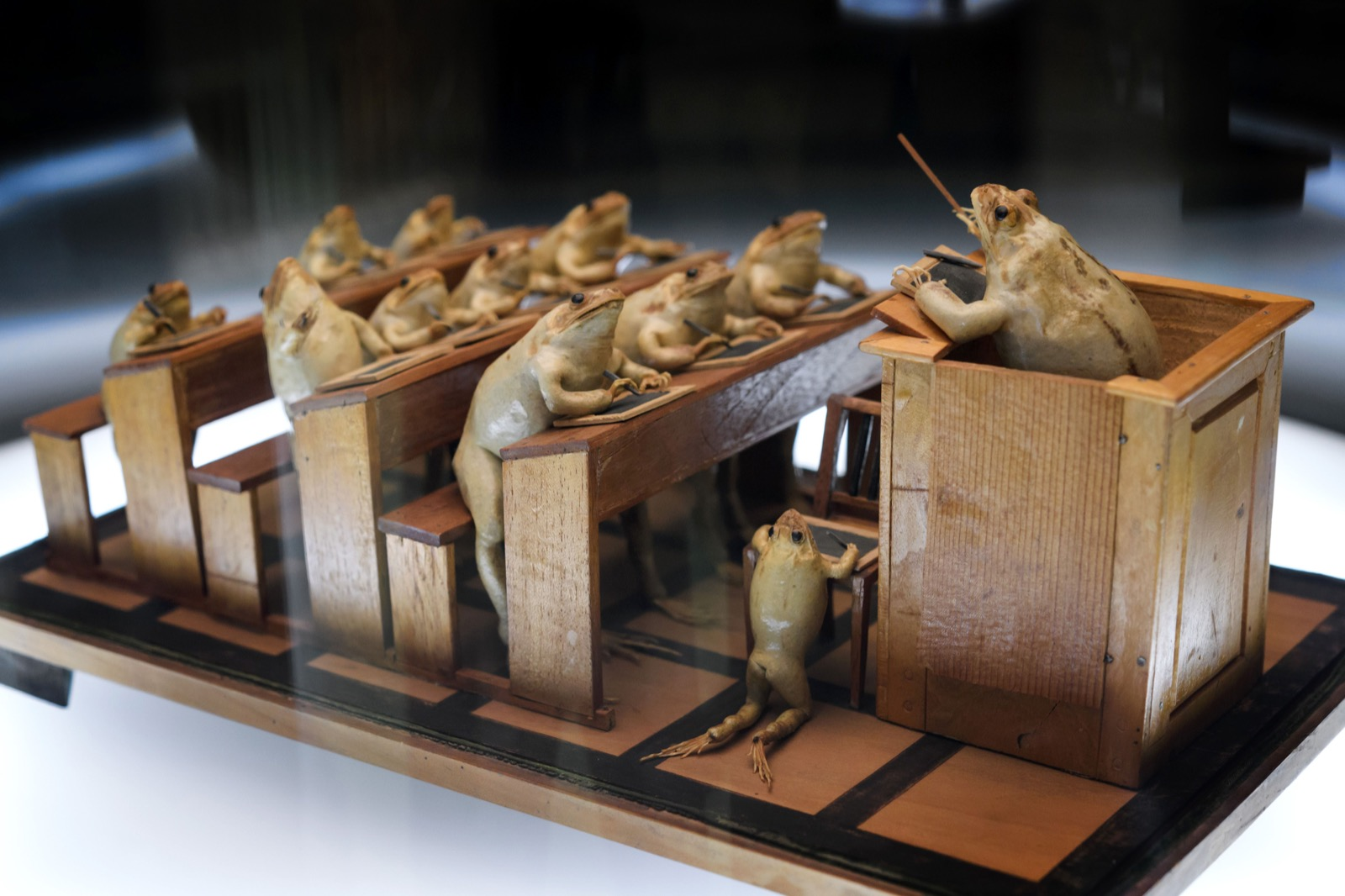Frogs-at-school-at-Frog-Museum-in-Estavayer-le-Lac-western-Switzerland-FABRICE-COFFRINI-AFP-Getty-Images-thechicflaneuse