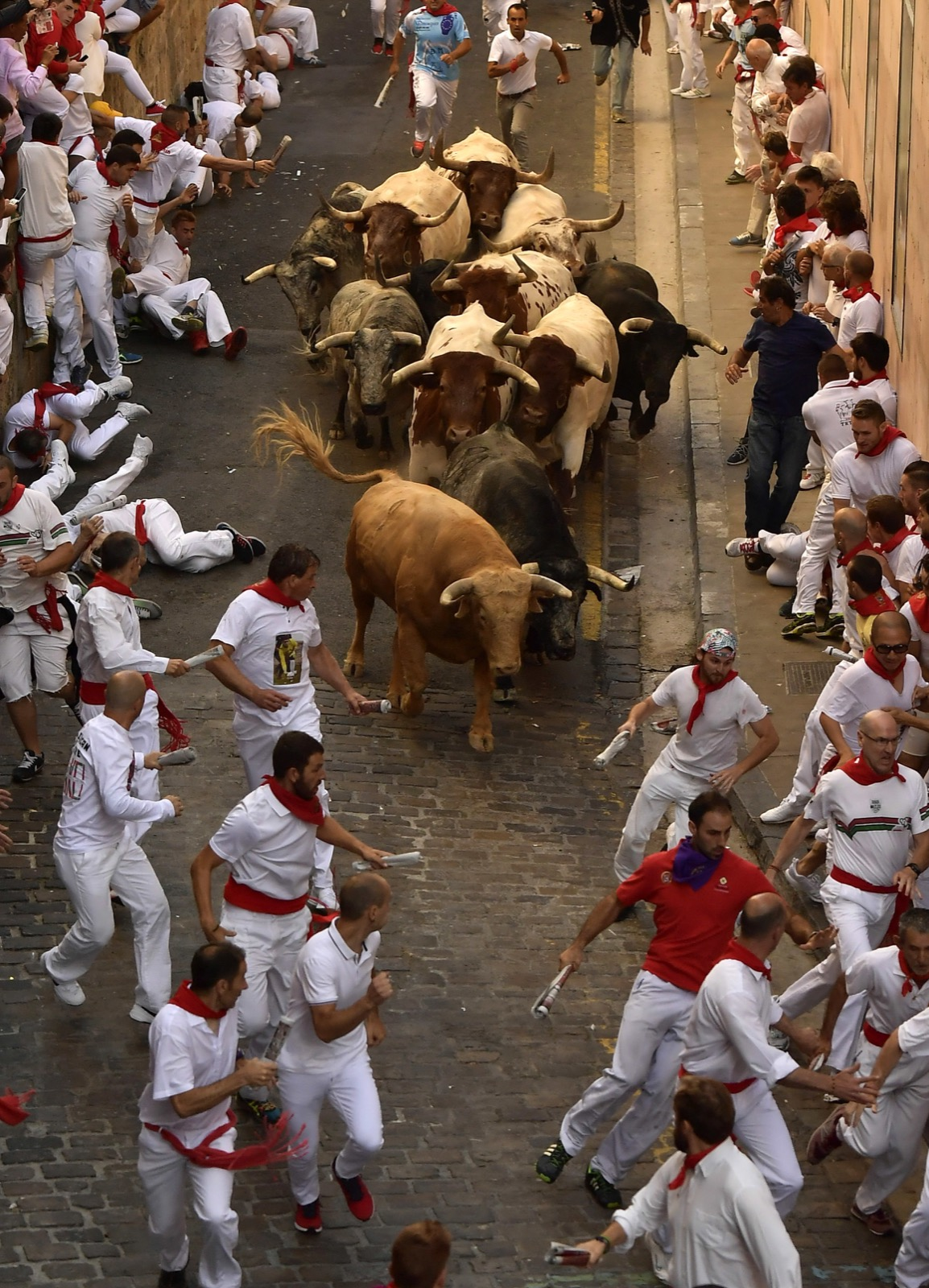 The runnings of the bulls Pamplona