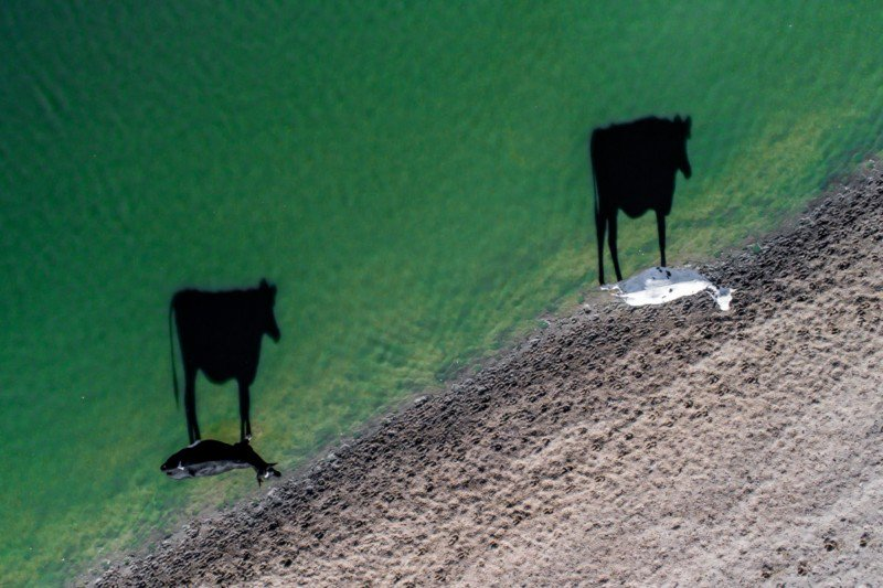 Two Moo Dronestagram 2017