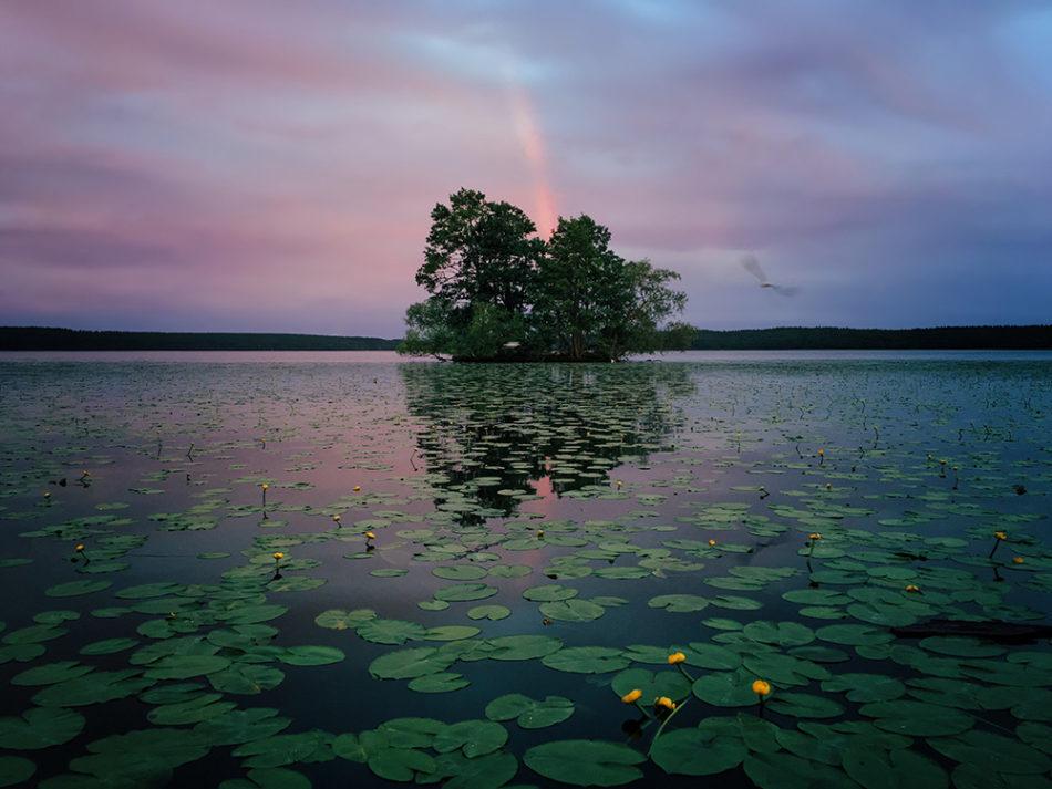 Aaron Sandberg Chicago IL, United States 1st Place – Nature