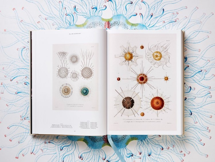 of the Art and Science of Ernest Haeckel