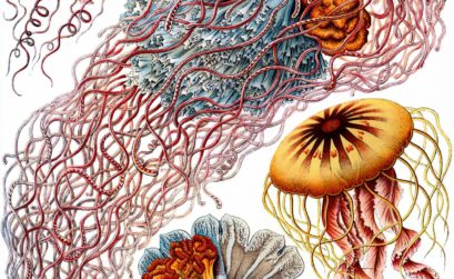 Ernst Haeckel closeup